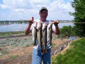 LEROY LEDEBOER'S MOSES LAKE CATCH YESTERDAY INCLUDED 22- AND 23-INCH WALLEYE. (LOIS LEDEBOER)
