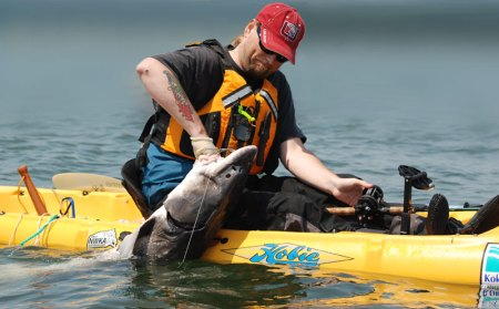 "84-INCH NORTHWEST STURGEON LANDED BY KAYAK ANGLER BRYCE ""ZEELANDER"" MOLENKAMP YESTERDAY, JUNE 16. (KARL STOMBERG)"