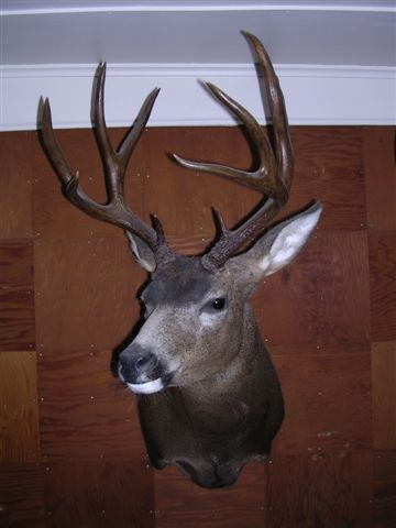 VIC MONAHAN'S BIG KITTITAS COUNTY BUCK. (VIC MONAHAN)